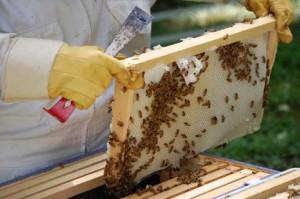 Древняя профессия пчеловод