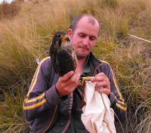 Увлекательная профессия - орнитолог