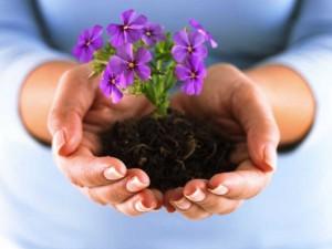 Выращивание цветов как бизнес