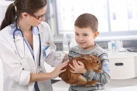 Как стать ветеринаром