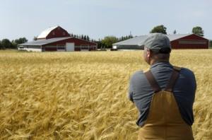 Начинающий фермер - работа в удовольствие